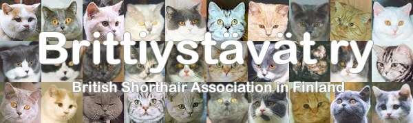 Brittiystävät ry - British Shorthair Association in Finland